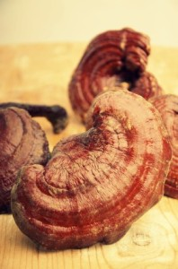 Boost Your Immune System With Reishi Mushroom