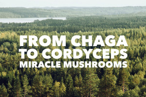 From Chaga To Cordyceps – Miracle Mushrooms